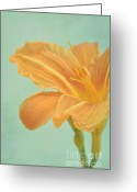 Flower Blossom Greeting Cards - Soft Orange Greeting Card by Iris Lehnhardt