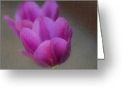 Tulips Pastels Greeting Cards - Soft Pastel Purple Tulips  Greeting Card by Teresa Mucha