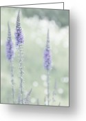 Soft Grunge Greeting Cards - Soft Pastels Greeting Card by Svetlana Sewell