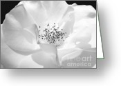 Black And White Floral Greeting Cards - Soft Petal Rose in Black and White Greeting Card by Jennie Marie Schell