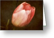 Purple Greeting Cards - Soft Pink Tulip Greeting Card by Cathie Tyler