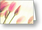 Flower Cards Greeting Cards - Soft Pinks Tulips Greeting Card by Jayne Logan