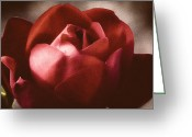 Nature Greeting Cards - Soft Rose Greeting Card by Frank Iusi