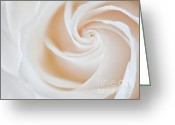 Plant Nursery Greeting Cards - Soft Swirls Greeting Card by Susan Candelario