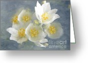 Romance Greeting Cards - Softly Awake My Heart Greeting Card by Zeana Romanovna