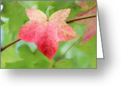 Photos Of Autumn Greeting Cards - Softly Comes the Fall Greeting Card by Rachel Cohen