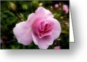 Flower. Petals Pastels Greeting Cards - Softly Romantic Greeting Card by Cindy Wright