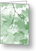 Light And Dark  Greeting Cards - Softness of Green Leaves Greeting Card by Jennie Marie Schell