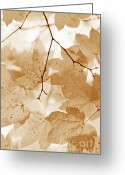 Brown Leaves Greeting Cards - Softness of Rusty Brown  Leaves Greeting Card by Jennie Marie Schell
