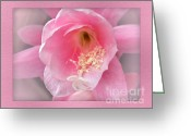 Stamen Greeting Cards - Soft..Pink..Delicate Greeting Card by Kaye Menner