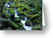 Olympic National Park Greeting Cards - Sol Duc Stream Greeting Card by Sandra Bronstein