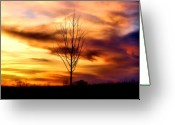 Colorful Photography Greeting Cards - Sole Searching Greeting Card by Karen M Scovill