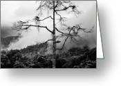 Cameron Greeting Cards - Solitary Tree Greeting Card by David Bowman