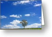Mood Greeting Cards - Solitary tree in green meadow Greeting Card by Bernard Jaubert