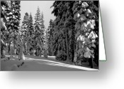 Winter Prints Greeting Cards - Solitude Greeting Card by Kathy Yates