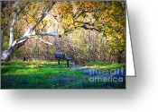White And Green Greeting Cards - Solitude under the Sycamore Greeting Card by Carol Groenen