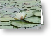 Lily Pad Greeting Cards Greeting Cards - Solo Water Lily Greeting Card by Barbara S Nickerson