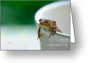 Toad Greeting Cards - Somebody Needs Coffee Greeting Card by Lois Bryan
