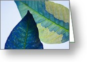 Blue Leaves Greeting Cards - Something Blue Greeting Card by Bobby Villapando