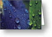 Dew Drops Greeting Cards - Sometimes Souls Collide Greeting Card by Laurie Search