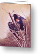 Red Wing Blackbird Greeting Cards - Song of the Marsh Greeting Card by Richard De Wolfe