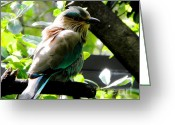 Colorful Birds Photo Greeting Cards - Songbird Greeting Card by Elizabeth Hoskinson