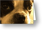 Starring Eyes Greeting Cards - Sorry Greeting Card by Angie Wingerd