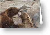 Grizzly Bears Greeting Cards - Sorting out the Order Greeting Card by Tim Grams