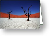 Tranquility Greeting Cards - Sossusvlei In Namib Desert, Namibia Greeting Card by Igor Bilic Photography