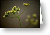 Plant Greeting Cards - Sound of Silence Greeting Card by Kimberly Gonzales