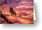 Sparrow Greeting Cards - Sounds of Spring Greeting Card by Bob Orsillo