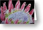 Home Tapestries - Textiles Greeting Cards - South African Flower Protea Painting Greeting Card by Sylvie Heasman