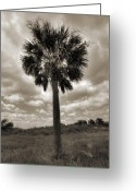 Sepia Greeting Cards - South Carolina Palmetto Palm Tree Greeting Card by Dustin K Ryan