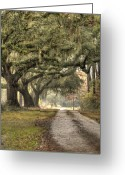 Live Oak Trees Greeting Cards - Southern Drive Live Oaks and Spanish Moss Greeting Card by Dustin K Ryan