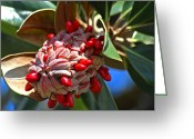 Magnolia Grandiflora Greeting Cards - Southern Magnolia Greeting Card by Carolyn Marshall