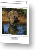 Waterhole Greeting Cards - Southern White Rhinoceros at Waterhole Greeting Card by Owen Bell