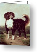 Working Dogs Greeting Cards - Spaniel Greeting Card by JW Morris