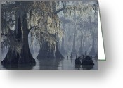 Refuges Greeting Cards - Spanish Moss Drapes Old Cypress Trees Greeting Card by John Eastcott And Yva Momatiuk