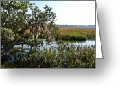 Driveways Greeting Cards - Spanish Moss  Greeting Card by Jim Goldseth