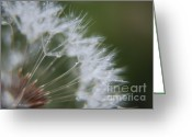 Dandelion Pyrography Greeting Cards - Sparkle Seeds Greeting Card by Yumi Johnson