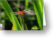 Transformative Art Greeting Cards - Sparkling Red Dragonfly Greeting Card by Lisa Redfern
