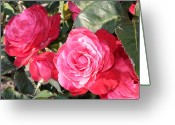 Roses Petals Greeting Cards - Sparkling Roses Greeting Card by Carol Groenen