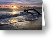Tidal River Greeting Cards - Sparkly Water at Driftwood Beach Greeting Card by Debra and Dave Vanderlaan
