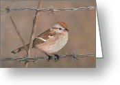 Wire Mixed Media Greeting Cards - Sparrow Greeting Card by Linda Hiller