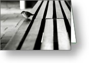 Sparrow Greeting Cards - Sparrow On Bench Greeting Card by photo by Jason Weddington