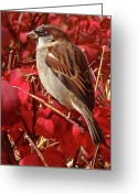 Brown Leaf Greeting Cards - Sparrow Greeting Card by Rona Black