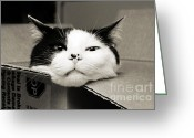Black And White Cat Greeting Cards - Special Delivery Its Pepper The Cat  Greeting Card by Andee Photography