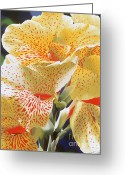 Canna Greeting Cards - Speckled Lucifer Canna Lily Greeting Card by Sharon Von Ibsch