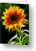 Unique Flowers Greeting Cards - Spectacular Sunflower Greeting Card by Pamela Johnson
