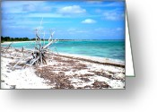 Tropical Photographs Greeting Cards - Speechless at the Beach Greeting Card by Danielle  Parent